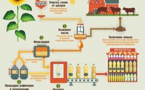 Технология производства растительного масла из семян подсолнечника